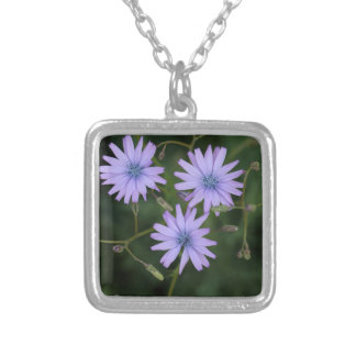 Flower of a mountain lettuce silver plated necklace