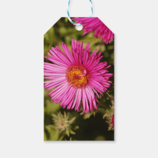 Flower of a New England aster Gift Tags