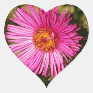 Flower of a New England aster Heart Sticker