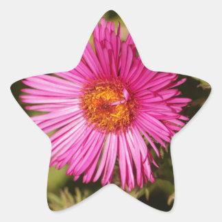 Flower of a New England aster Star Sticker