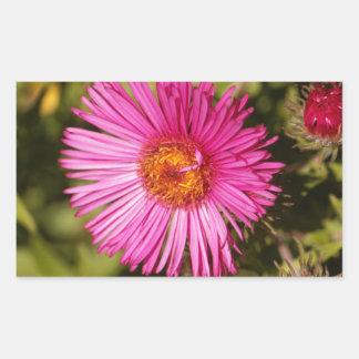Flower of a New England aster Sticker