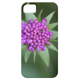 Flower of a Scabiosa lucida iPhone 5 Case