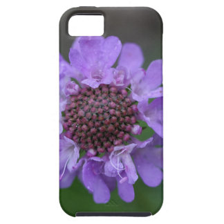 Flower of a Scabiosa lucida iPhone 5 Cases