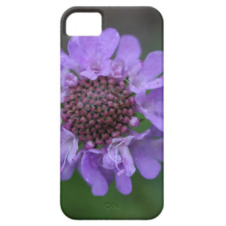 Flower of a Scabiosa lucida iPhone 5 Covers