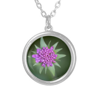 Flower of a Scabiosa lucida Silver Plated Necklace