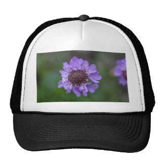 Flower of a Scabiosa lucida Trucker Hat