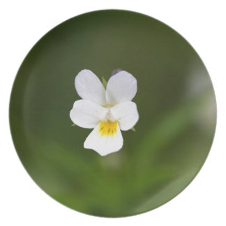 Flower of a wild field pansy dinner plate