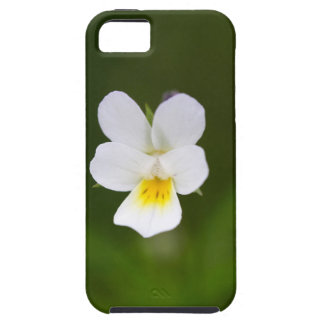 Flower of a wild field pansy iPhone 5 cases