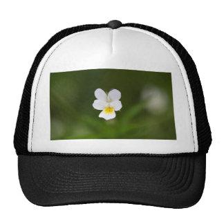 Flower of a wild field pansy trucker hat