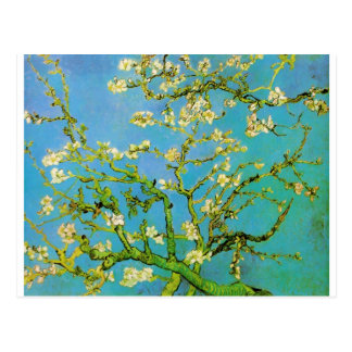 Flower of Almond tree Postcard