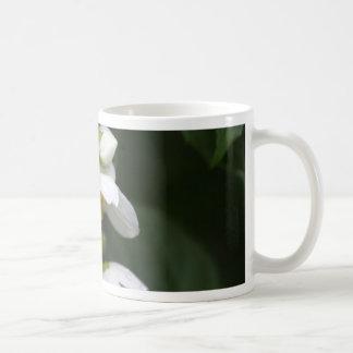 Flower of an English dogwood bush Coffee Mug