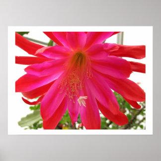 Flower of Love Poster