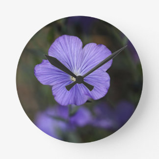 Flower of perennial or blue flax clock