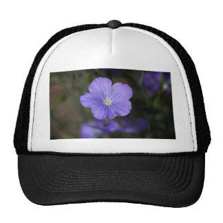 Flower of perennial or blue flax trucker hat