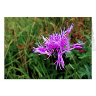 Flower of Scotland Card