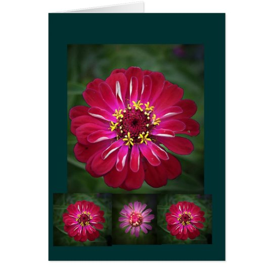 Flower of Summer Card