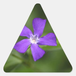 Flower of the bigleaf periwinkle (Vinca major). Triangle Sticker