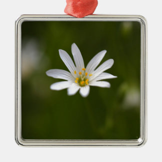Flower of the  greater stitchwort Silver-Colored square ornament