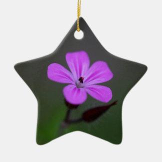 Flower of the Herb-Robert, Geranium robertianum. Ceramic Star Ornament