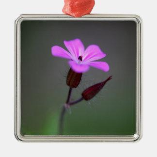 Flower of the Herb-Robert, Geranium robertianum. Silver-Colored Square Ornament