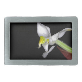 Flower of the orchid Ludisia discolor Belt Buckles