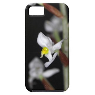 Flower of the orchid Ludisia discolor iPhone 5 Cover