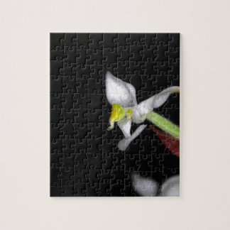 Flower of the orchid Ludisia discolor Jigsaw Puzzle