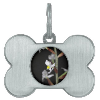 Flower of the orchid Ludisia discolor Pet Name Tags