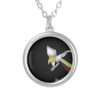 Flower of the orchid Ludisia discolor Silver Plated Necklace