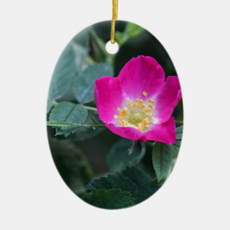 Flower of the wild Soft Downy Rose Ceramic Oval Ornament
