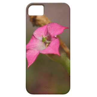 Flower of tobacco (Nicotiana tabacum) Case For The iPhone 5