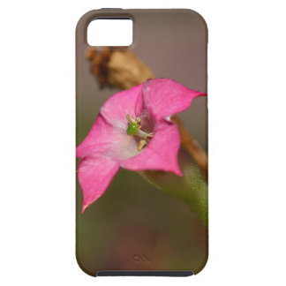 Flower of tobacco (Nicotiana tabacum) iPhone 5 Case