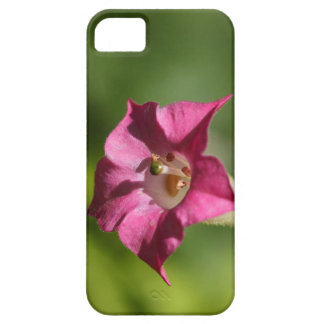 Flower of tobacco (Nicotiana tabacum) iPhone 5 Cover