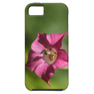 Flower of tobacco (Nicotiana tabacum) iPhone 5 Covers