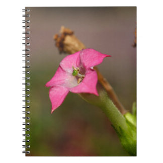 Flower of tobacco (Nicotiana tabacum) Notebooks