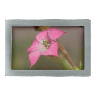 Flower of tobacco (Nicotiana tabacum) Rectangular Belt Buckle