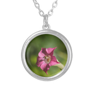 Flower of tobacco (Nicotiana tabacum) Silver Plated Necklace