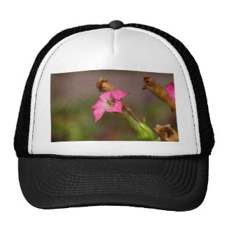 Flower of tobacco (Nicotiana tabacum) Trucker Hat