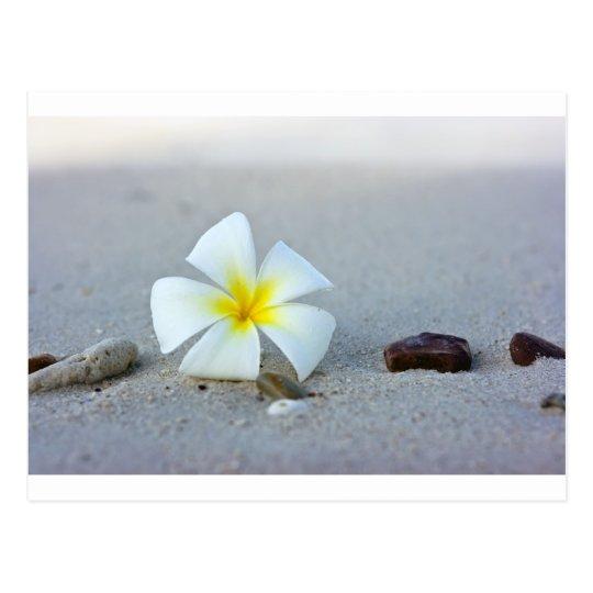 Flower on beach postcard
