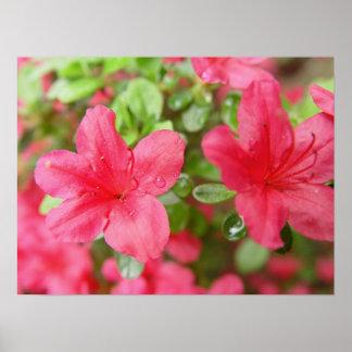 Flower Pair Poster