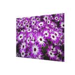 Flower pattern, Kuekenhof Gardens, Lisse, Canvas Print
