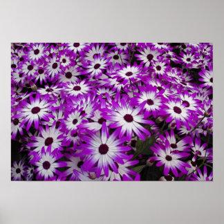 Flower pattern, Kuekenhof Gardens, Lisse, Poster