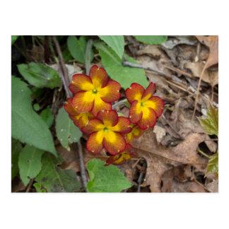 Flower Photography Postcard