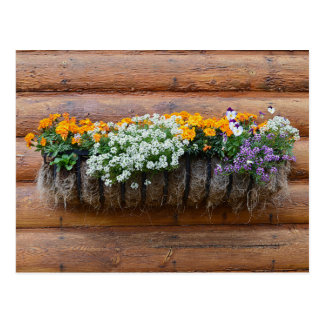 Flower Planter Log Cabin Postcard