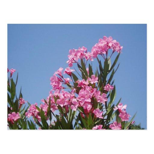 Flower Post Card