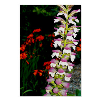Flower poster California photography art