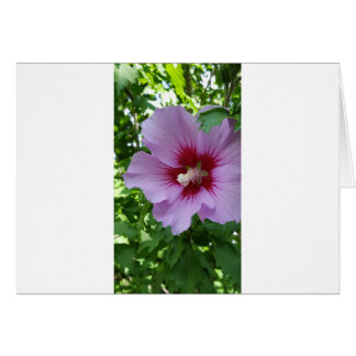 Flower Pretty In Pink Card