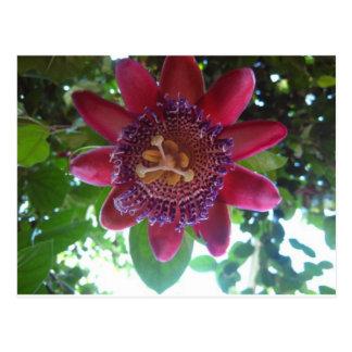 flower,purple passionflower postcard