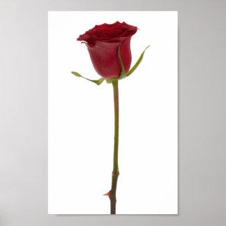 Flower Set 1 - Red Rose Poster
