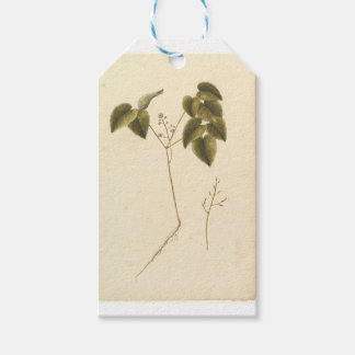 Flower Study - Watercolor Gift Tags